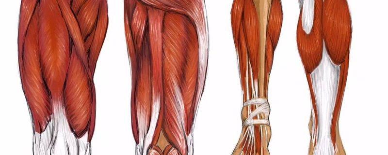 آناتومی اندام تحتانی (خلف ،ساق و کف پا)