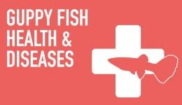 آشنایی با بهداشت و بازرس ماهی
