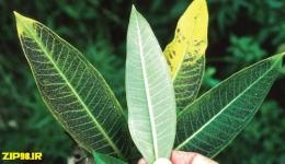 اثرات آلاینده های اتمسفری بر گیاهان