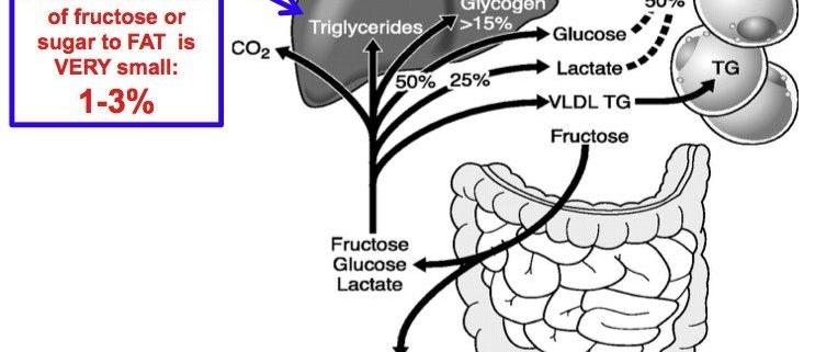 متابولیسم قندها و بیماری های ناشی از اختلالات آنها