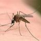 بیماری های ناشی از پشه خاکی و روش های مبارزه و کنترل