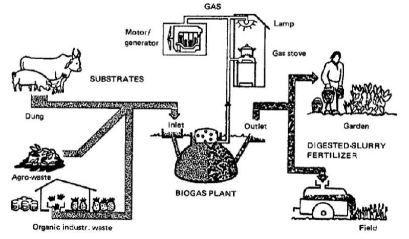 نقش تولید بیوگاز در کشاورزی