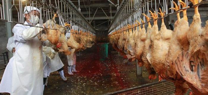 بهداشت، بازرسی و کنترل کیفی مرغ در کشتارگاه