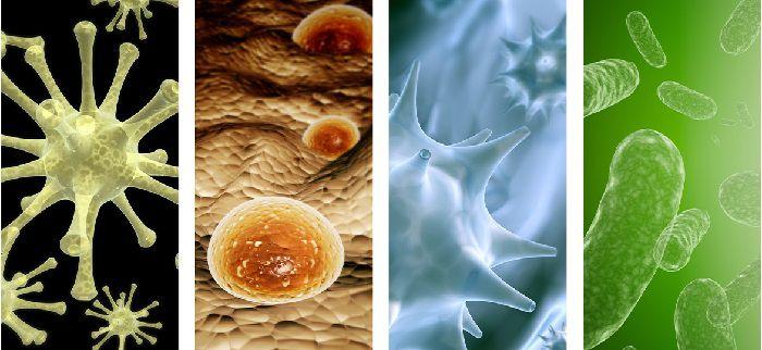 انگل و قارچ شناسی آب