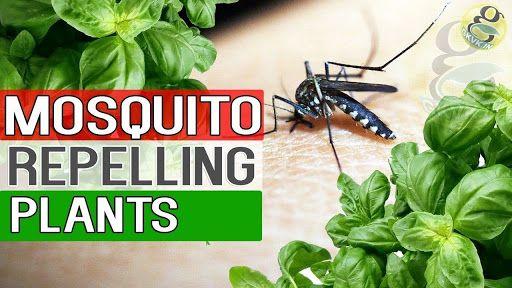 مصرف صحیح سموم دفع آفات نباتی