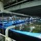 بررسی تاثیر آهک پاشی در کیفیت آب استخرهای پرورشی