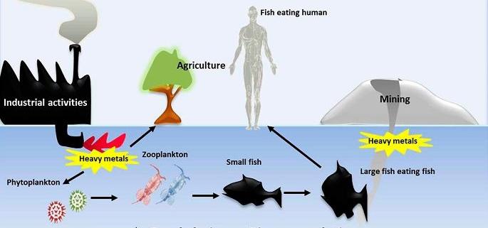 فلزات سنگین در ماهی و عوارض ناشی از آنها
