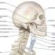 دانلود کتاب آناتومی بالینی سر و گردن