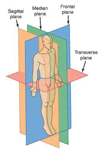 صفحات آناتومیک (Anatomical Plane)