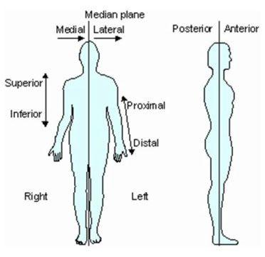 اصطلاحات مربوط به آناتومی