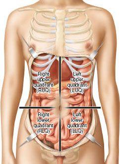 دیواره قدامی شکم