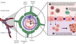 شوک: نارسایی متابولیکی سلولی در بیماری وخیم