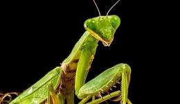 جزوه مورفولوژی و فیزیولوژی حشرات