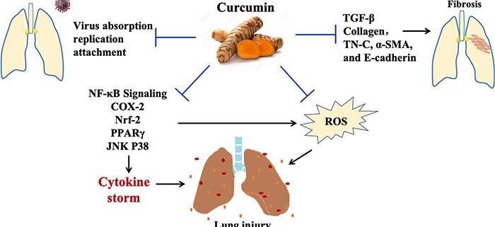 کورکومین به عنوان مکمل درمان کووید-19: مروری بر مکانیسم ها